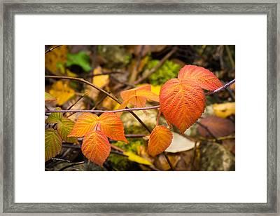 Fall Leaf Patterns Framed Print