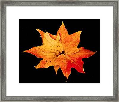 Framed Print featuring the photograph Fall Leaf Trio by Dee Dee  Whittle