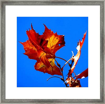 Framed Print featuring the photograph Fall Leave by David  Norman