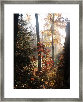 Fall Leaves In Morning Framed Print by Susan Crossman Buscho