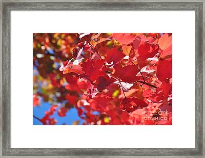 Framed Print featuring the photograph Fall Leaves In Oregon by Mindy Bench