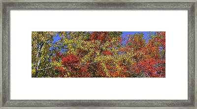 Fall Leaves In So Cal Framed Print by Scott Campbell
