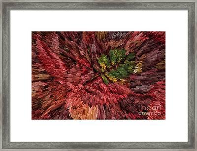 Fall Leaves  Framed Print by John Farnan