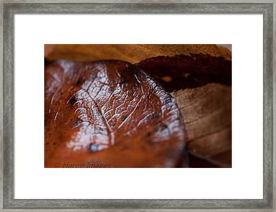 Framed Print featuring the photograph Fall Leaves by Haren Images- Kriss Haren