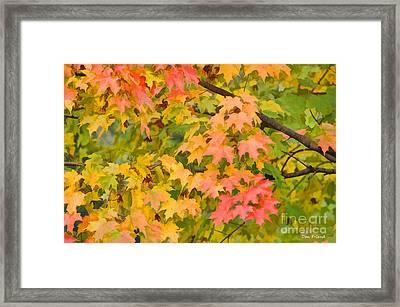 Fall Leaves Maple Tree Framed Print by Dan Friend