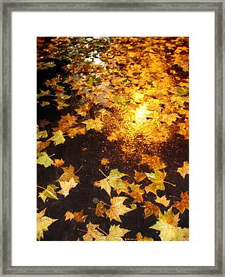 Fall Leaves Framed Print by Michel Mata
