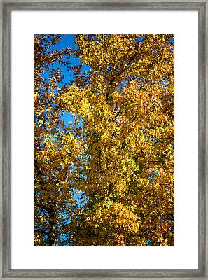 Fall Leaves Framed Print by Mike Lee