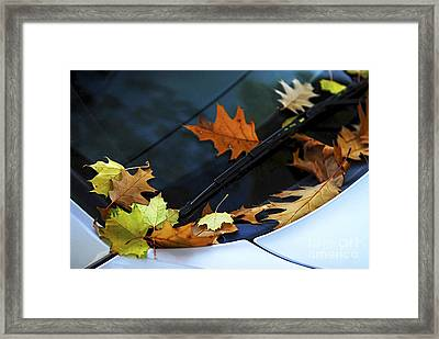 Fall Leaves On A Car Framed Print by Elena Elisseeva
