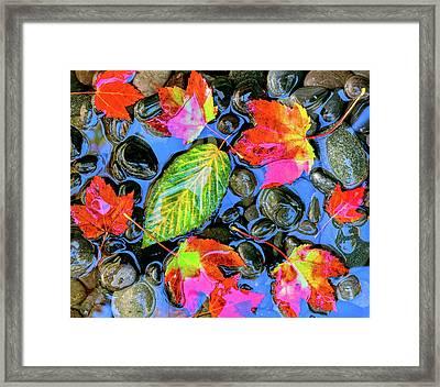 Fall Leaves On Black Rocks In Water Framed Print
