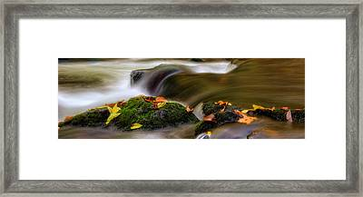 Fall Leaves On Mossy Rocks Framed Print