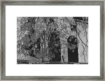 Fall Leaves On Open Windows Jerome Balck And White Framed Print