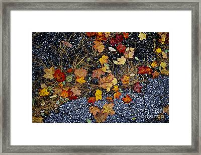 Fall Leaves On Pavement Framed Print