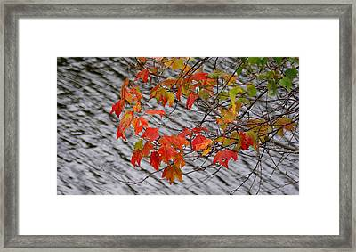 Fall Leaves Over The Lake Framed Print by Lois Lepisto