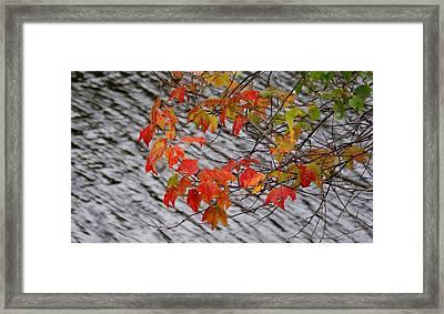 Fall Leaves Over The Lake Framed Print