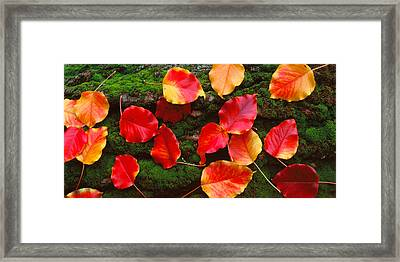 Fall Leaves Sacramento Ca Usa Framed Print