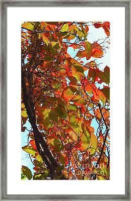 Fall Leaves Framed Print by Scott Cameron