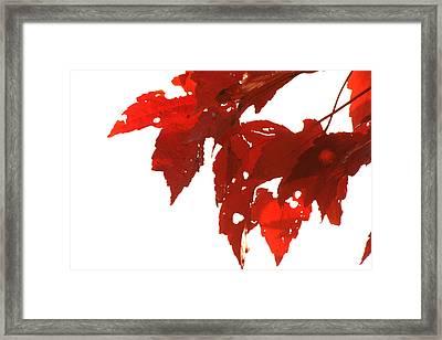 Fall Leaves Framed Print by Susie DeZarn