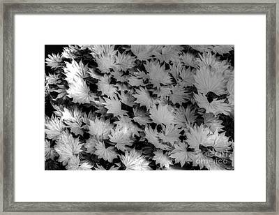 Fall Leaves Framed Print by Tap On Photo