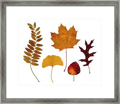 Fall Leaves Framed Print by Tony Cordoza