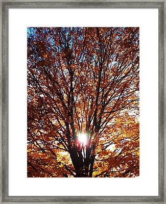 Fall Light Framed Print