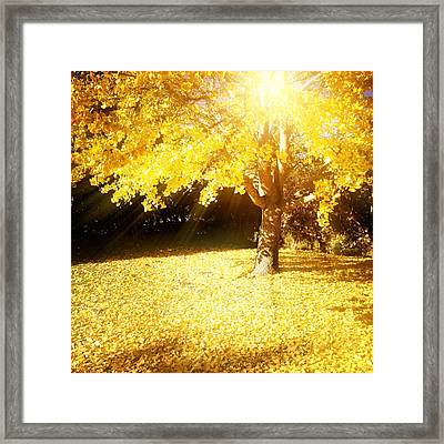 Fall Light Framed Print by Les Cunliffe