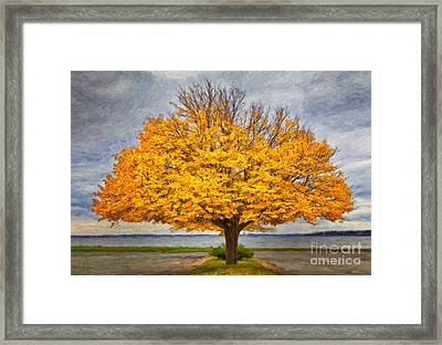 Fall Linden Framed Print by Verena Matthew