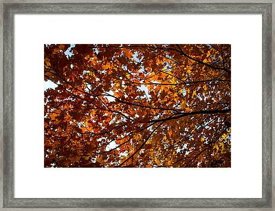 Framed Print featuring the photograph Fall Maples - 02 by Wayne Meyer