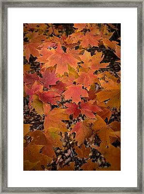 Framed Print featuring the photograph Fall Maples - 03 by Wayne Meyer