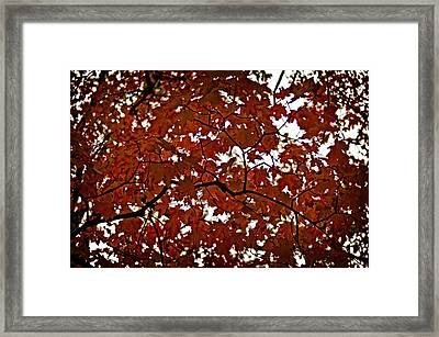 Framed Print featuring the photograph Fall Maples - 04 by Wayne Meyer