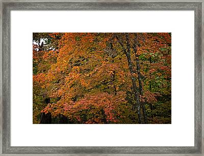 Framed Print featuring the photograph Fall Maples - 05 by Wayne Meyer