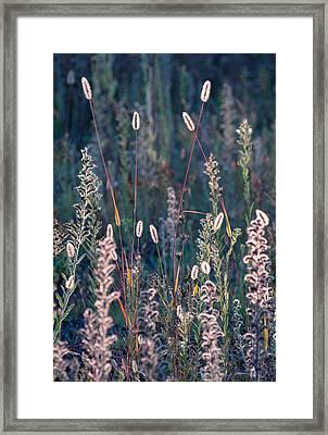 Fall Meadow Backlit Framed Print