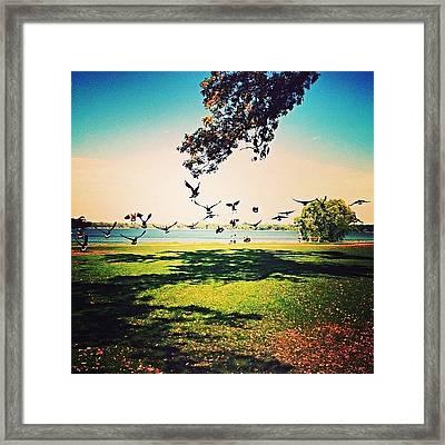 Fall Migration Framed Print