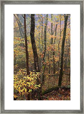 Fall Mist Framed Print by Chad Dutson