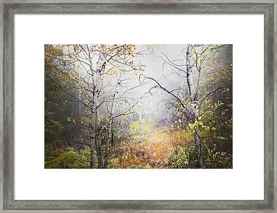 Fall Mist Framed Print by Theresa Tahara
