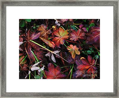 Framed Print featuring the photograph Fall Mix by Janice Westerberg