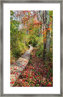 Fall Morning Framed Print