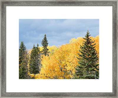 Framed Print featuring the photograph Fall Near Ya Ha Tinda by Ann E Robson