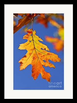 Turning Leaves Framed Prints