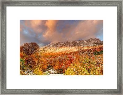 Fall On Display Framed Print