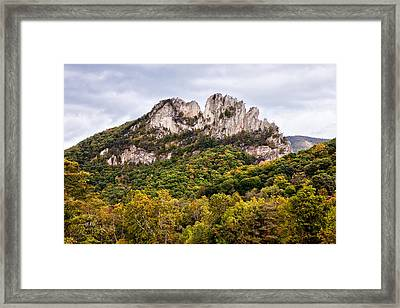 Fall On Seneca Rocks West Virginia Framed Print by Dan Carmichael