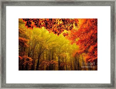 Fall On Steroids - Blue Ridge Parkway Framed Print by Dan Carmichael