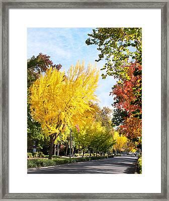 Fall On The Esplanade  Framed Print
