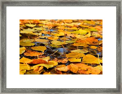 Fall On The Water  Framed Print