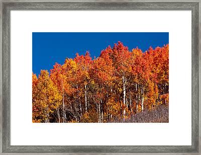 Fall Orange Framed Print