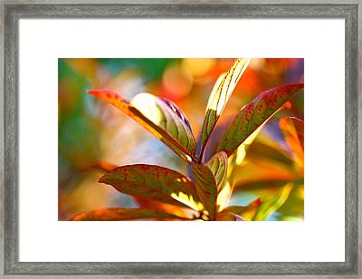 Fall Party Framed Print by Tracy Male