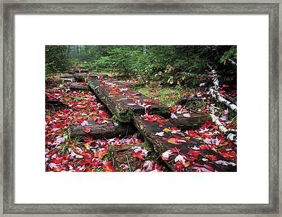Fall Path Framed Print