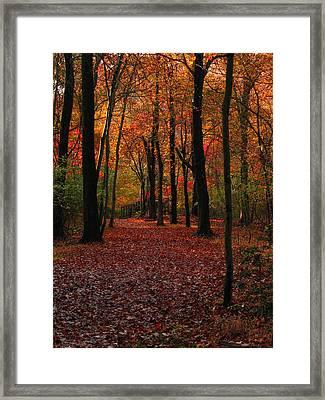 Fall Path Framed Print by Raymond Salani III