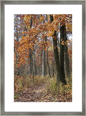 Fall Pathway Overhang Framed Print by Dylan Punke