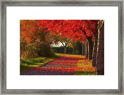 Fall Pheasant Framed Print