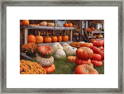 Fall Pumpkins And Gourds Framed Print